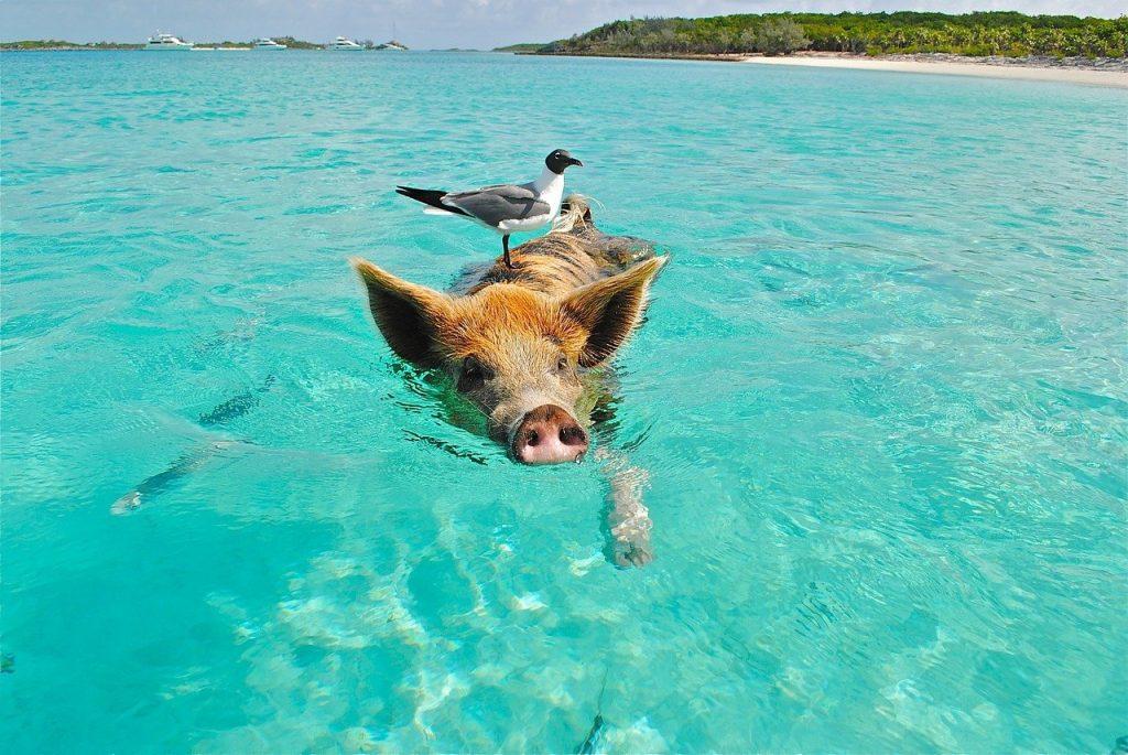 ou se trouvent les bahamas