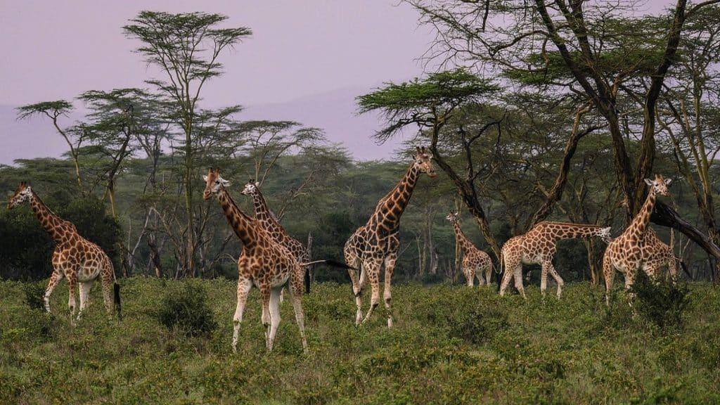 4 destinations de choix à découvrir au Kenya